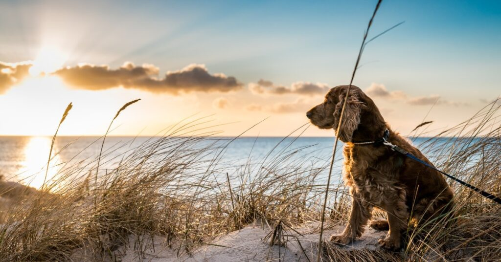 Dog-friendly holiday cottages in Southwold