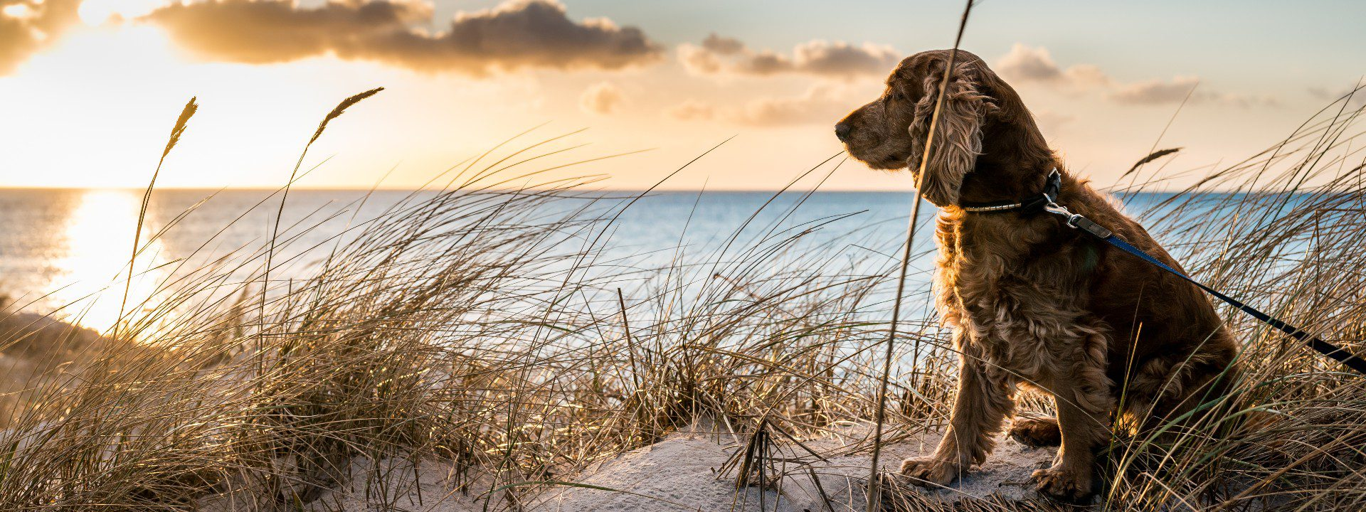 Pet friendly holiday cottages in Southwold